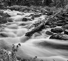 Flowing Rocky Mountain Stream in Black and White by Bo Insogna