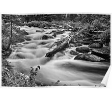 Flowing Rocky Mountain Stream in Black and White Poster