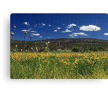 Springtime In Hat Creek Canvas Print