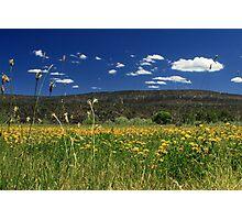 Springtime In Hat Creek Photographic Print