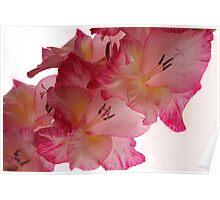 Pink Flower 7985 Poster