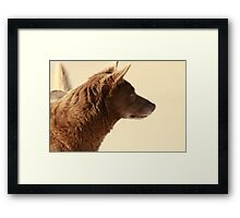 Brown Dog Framed Print