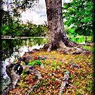 Audubon Live Oak by RayDevlin