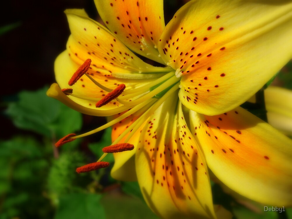 Simple Lilly by Debby1