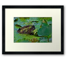 beaver and Lily Pads Framed Print
