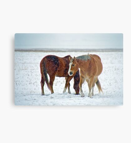Equine Winter Metal Print