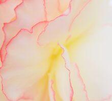 Gently... by LindaR