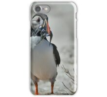 Puffin with sand eels iPhone Case/Skin