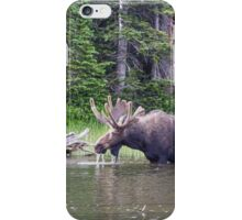Water Feeding Moose iPhone Case/Skin