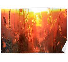 Golden Grass Light Show Poster