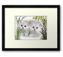 Kittens ..  Framed Print