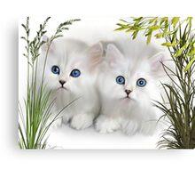 Kittens ..  Canvas Print