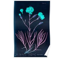 A curious herbal Elisabeth Blackwell John Norse Samuel Harding 1737 0220 Clove July Flowers Inverted Poster
