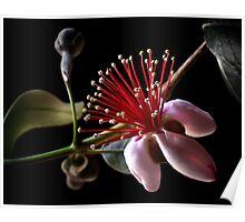 Guava  Poster