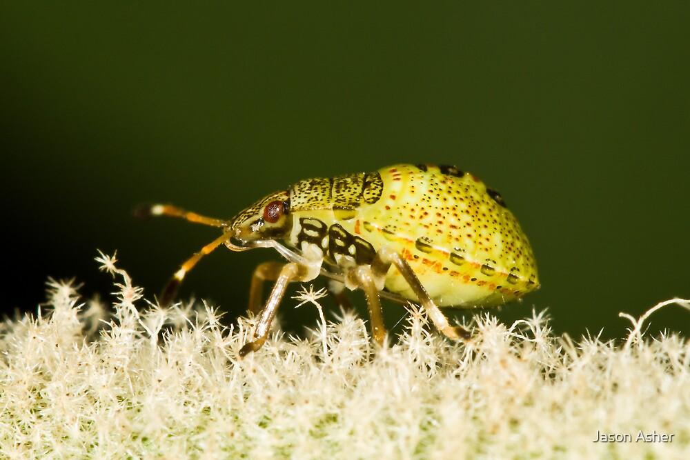 Mystery Bug by Jason Asher