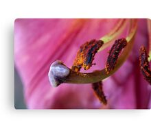 Lily Bits Canvas Print