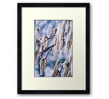 Lambs tails Framed Print
