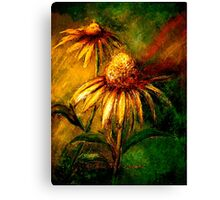 Flowers...Echinacea Purpurea 2 (Coneflower) Canvas Print