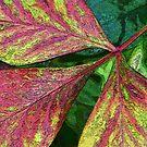 Leaves by Sherilee Evelyn