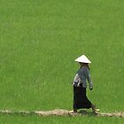 Vietnam - Riz  mre. by Jean-Luc Rollier