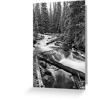 Pine Tree Forest Creek Portrait In Black and White Greeting Card