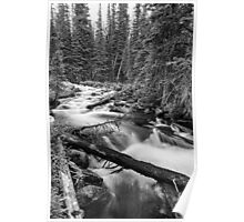 Pine Tree Forest Creek Portrait In Black and White Poster