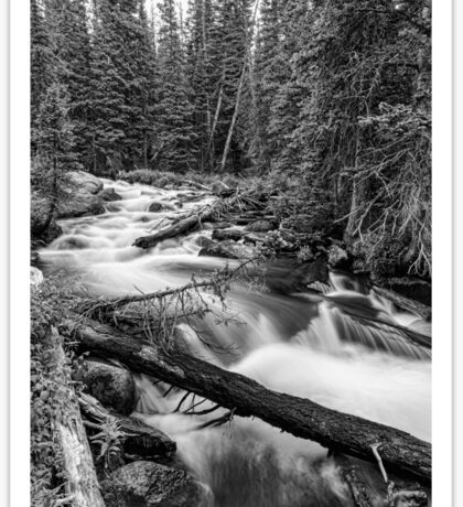 Pine Tree Forest Creek Portrait In Black and White Sticker