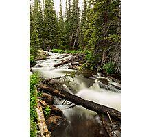 Pine Tree Forest Creek Portrait Photographic Print