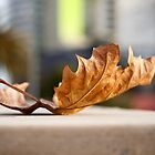 leaf in the city by Ashley P