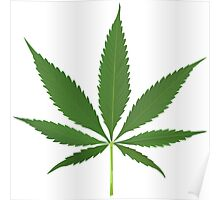 Cannabis leaf vector Poster