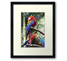 Araras Framed Print