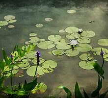The Water Lilies by Aaron Campbell