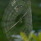 The Web We Weave by Lin Taylor