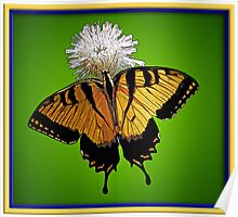 Swallowtail Poster