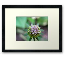 Launchpad Flower Framed Print