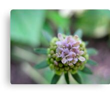 Launchpad Flower Canvas Print