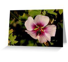 Pink Macro Hibiscus Greeting Card