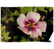 Pink Macro Hibiscus Poster