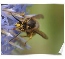 Hoverfly 02 Poster