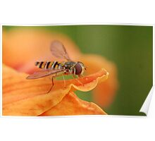 Hoverfly 03 Poster