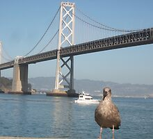 Cheeky Seagull in Front of Bay Bridge by Humliej