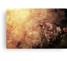 Immersed in illumination Canvas Print