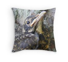 Baby American Robin Throw Pillow