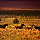 Running Horses by socalgirl