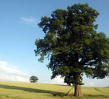Oaktree in field by Kevin McNeill