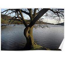 Rudyard lake tree Poster