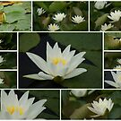 Water Lily Collage by Sandra Cockayne