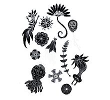 Sea Ballet in Black and White with Apologies to Ernst Haeckel Photographic Print