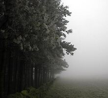 Foggy landscape by Kevin McNeill