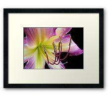 Grape © Framed Print